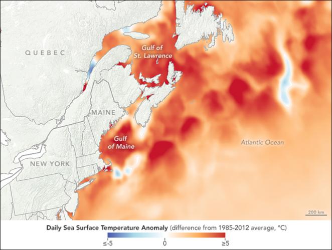 satellite-computer-model-data-heatwave-gulf-of-maine